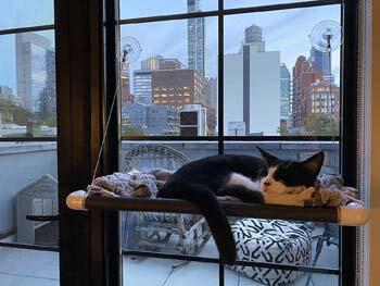 2. Kitty Cot Original World's Best Cat Perch